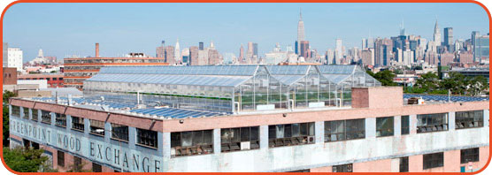 Gotham Greens Hydroponic Greenhouses is perched on the rooftop of a building in Brooklyn.